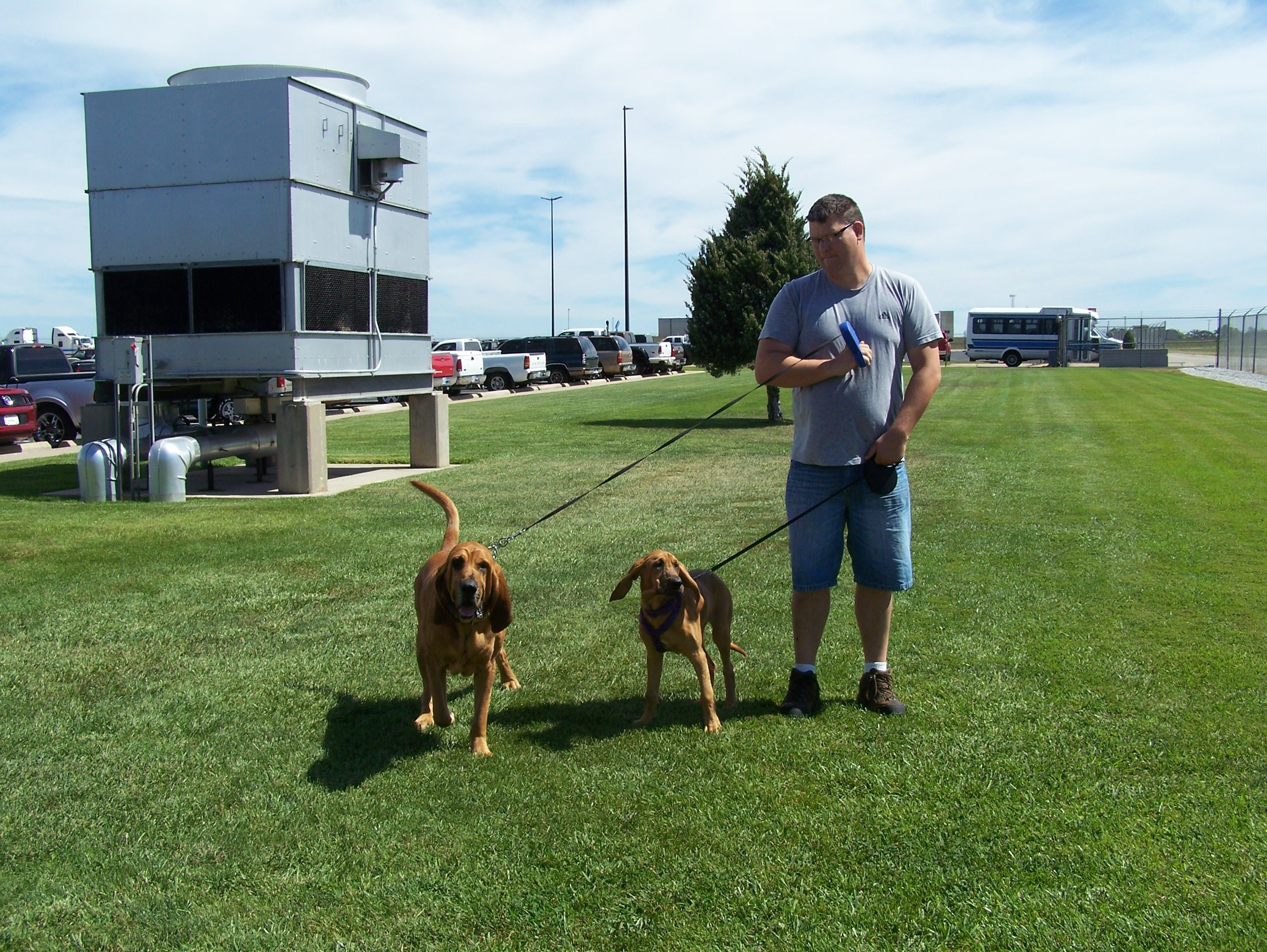 Bloodhounds on the road
